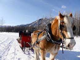 8 epic things to do during winter in alberta canada the travelista