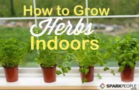 how to start an indoor herb garden sparkpeople