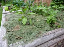 vegetable garden mulch pictures should i use wood chips for