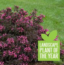 spilled wine weigela florida proven winners