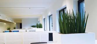 plantes bureau bureau plant axis