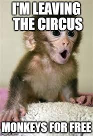 Baby Monkey Meme - surprised baby monkey memes imgflip