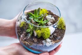 succulent kits succulent terrarium kit medium terrarium gift succulent