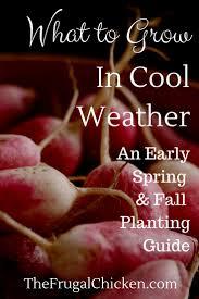 Fall Vegetable Garden Ideas by 2025 Best Garden Images On Pinterest Plants Garden Ideas And