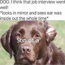 Laugh Out Loud Meme - 34 fresh animal memes that will make you laugh out loud memes