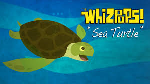 sea turtle by the whizpops youtube