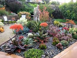 Succulent Gardens Ideas Best Succulent Garden Ideas Where To Start With The Succulent