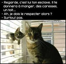 Meme Chat - les chats meme by huzz26 memedroid