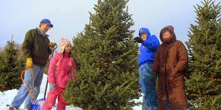 christmas trees tips and tricks from the farmers