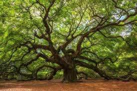 15 astounding facts about trees mnn nature
