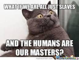 Sudden Realization Meme - sudden realization cat memes memes pics 2018