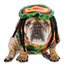 zelda halloween costumes zelda 70 u0027s rasta halloween dog costume with same day shipping