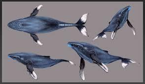 humpback whale wip