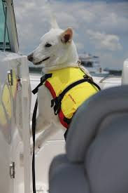 west marine black friday 71 best boating pets images on pinterest boating sailing and