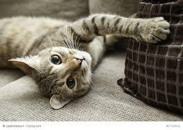 gerüche die katzen nicht mö katzenurin und geruch entfernen wir haben hier alle tipps und tricks