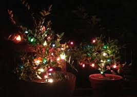 christmas lights to protecting trees from with christmas lights hitchhiking to