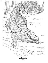 unique crocodile coloring page 44 in coloring pages online with