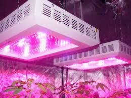 philips led grow light images of philips collaborated with chicago agribusiness green sense