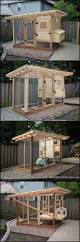 53 best chicken coops images on pinterest backyard chickens