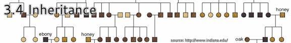 inheritance pattern quizlet 3 4 inheritance bioknowledgy