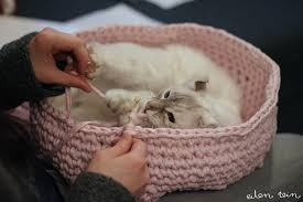 Cats In Dog Beds 16 Diy Dog Bed Projects Diy Cat Houses That Are The Cat U0027s Meow