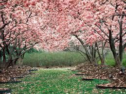 spring background pictures for desktop wallpapersafari