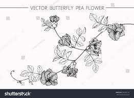 drawing flowers vector collection set butterfly stock vector