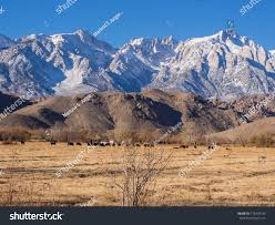 U S Route 395 In by View Mt Whitney Us Route 395 Stock Photo 178428185 Shutterstock