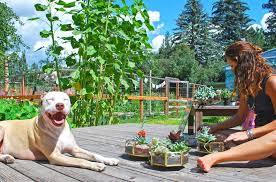 diy succulent terrarium plants supplies and care