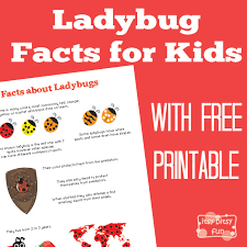 ladybug facts for itsy bitsy