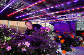 purdue gets 4 88 million grant to study led lighting of plants