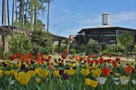 Garden Botanical Cape Fear Botanical Garden Home