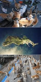 cat island this cat island in japan is no optical illusion and here u0027s the