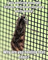Moth Meme - misunderstood miller moth memes quickmeme
