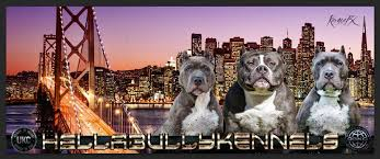 american pitbull terrier for sale ohio xl bully pitbulls puppies for sale xxl american bully breeder