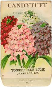 flower seed packets 39 best vintage seed packets and catalogues images on