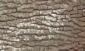 free high quality collection of 33 bark textures naldz graphics