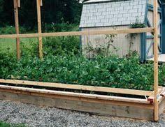 easy pea trellis pea trellis pea trellis gardens and garden ideas
