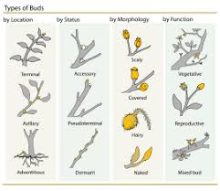 Names And Images Of Flowers - bud wikipedia