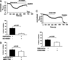 selective inhibition of kca3 1 channels mediates adenosine