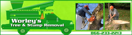 affordable tree service crossville tn tree care and lot clearing crossville tn