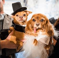 Dog Wedding Dress She Dresses Her Famous Dog In This Designer Wedding Dress For One