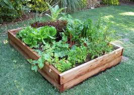 5 diy techniques for creating productive vegetable gardening beds