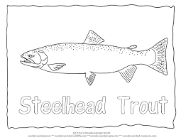 steelhead trout coloring page trout pictures u0026 outlines for fish