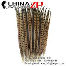 Choosed by Ringneck Pheasant Tail Feathers Ringneck Pheasant Tail Feathers