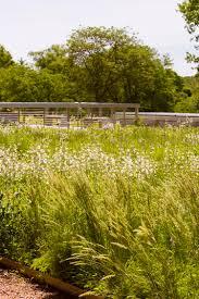 native prairie plants my chicago botanic garden tag archive rooftop garden