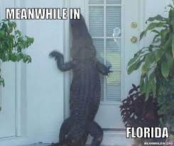 Florida Meme - meanwhile in funny meme pictures meanwhile in
