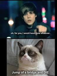 New Grumpy Cat Meme - grumpy cat meme 12 13 new grumpy cat memes humor pinterest