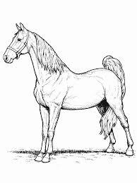 coloriage de chevaux à imprimer