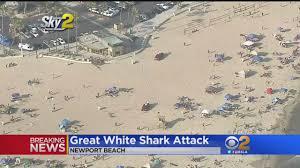 Great White Shark Attack Cape Cod - beach closed after alleged great white shark attack youtube